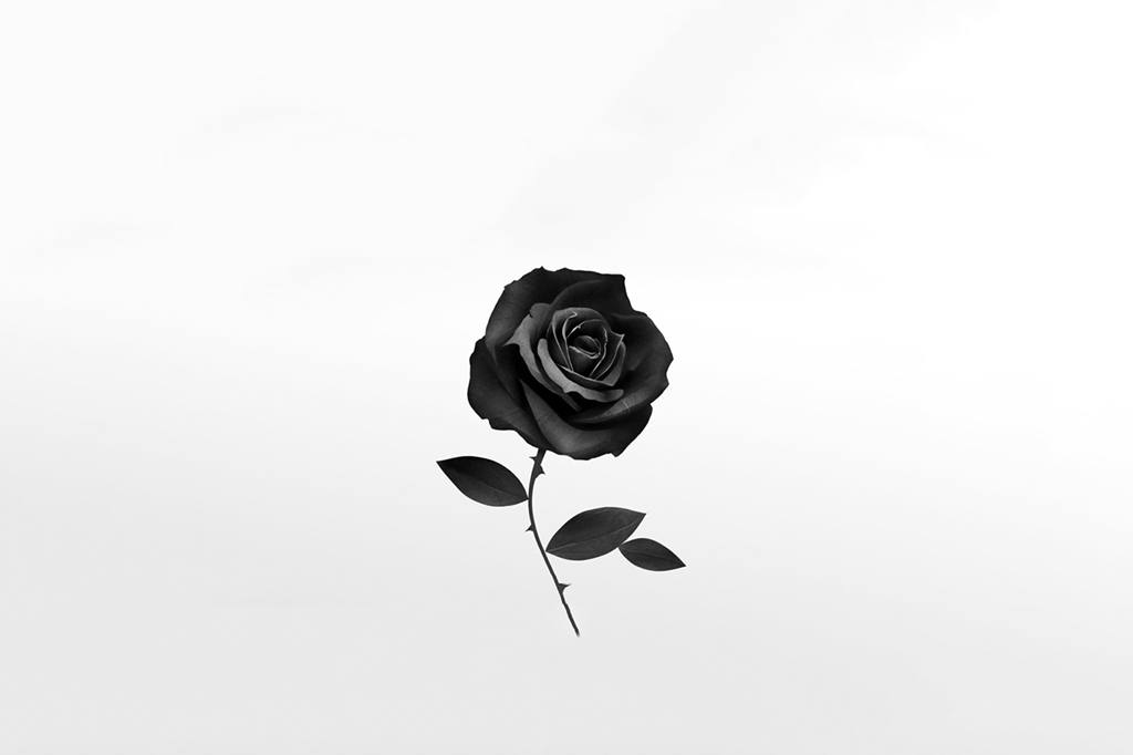 Pics of a black rose for Do black roses really exist